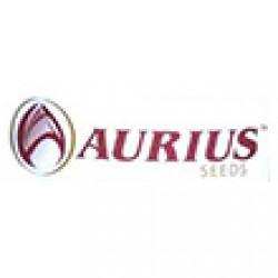 آریوس سیدز-AURIUS SEEDS
