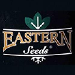 استرن سید-eastern seeds