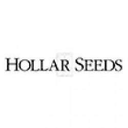 هولار-hollar seeds