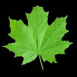 تنظیم کننده رشد گیاهی