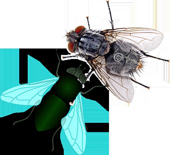 سموم کشاورزی و موجودات موزی و حشرات