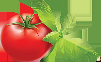 بذر سبزیجات و صیفی جات